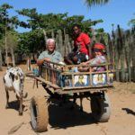 Local experience for travelers in search of more specialist wildlife. Madagascar offers a lot of different landscapes.
